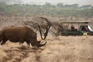lewa_safari_camp_-_activities__wildlife_-_game_drive__white_rhino-61