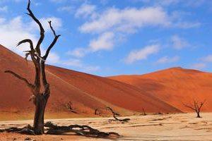 Namib 1 1