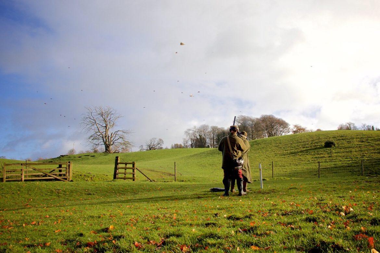 Driven Pheasant, Mallards and Partridge in Northern Ireland